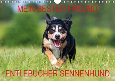 Mein bester Freund - Entlebucher Sennenhund (Wandkalender 2019 DIN A4 quer), N N
