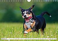Mein bester Freund - Entlebucher Sennenhund (Wandkalender 2019 DIN A4 quer) - Produktdetailbild 2