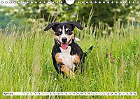 Mein bester Freund - Entlebucher Sennenhund (Wandkalender 2019 DIN A4 quer) - Produktdetailbild 4