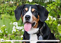 Mein bester Freund - Entlebucher Sennenhund (Wandkalender 2019 DIN A4 quer) - Produktdetailbild 3