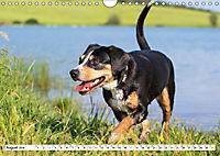 Mein bester Freund - Entlebucher Sennenhund (Wandkalender 2019 DIN A4 quer) - Produktdetailbild 8