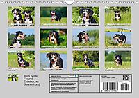 Mein bester Freund - Entlebucher Sennenhund (Wandkalender 2019 DIN A4 quer) - Produktdetailbild 13