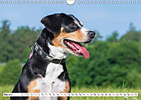 Mein bester Freund - Entlebucher Sennenhund (Wandkalender 2019 DIN A4 quer) - Produktdetailbild 5