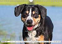 Mein bester Freund - Entlebucher Sennenhund (Wandkalender 2019 DIN A4 quer) - Produktdetailbild 10