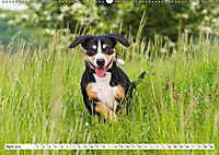 Mein bester Freund - Entlebucher Sennenhund (Wandkalender 2019 DIN A2 quer) - Produktdetailbild 4