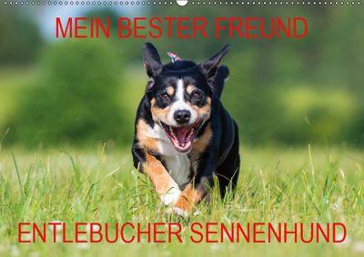 Mein bester Freund - Entlebucher Sennenhund (Wandkalender 2019 DIN A2 quer), N N
