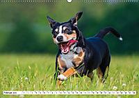 Mein bester Freund - Entlebucher Sennenhund (Wandkalender 2019 DIN A2 quer) - Produktdetailbild 2