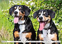 Mein bester Freund - Entlebucher Sennenhund (Wandkalender 2019 DIN A2 quer) - Produktdetailbild 1