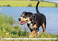Mein bester Freund - Entlebucher Sennenhund (Wandkalender 2019 DIN A2 quer) - Produktdetailbild 8