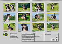 Mein bester Freund - Entlebucher Sennenhund (Wandkalender 2019 DIN A2 quer) - Produktdetailbild 13