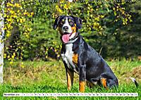 Mein bester Freund - Entlebucher Sennenhund (Wandkalender 2019 DIN A2 quer) - Produktdetailbild 11