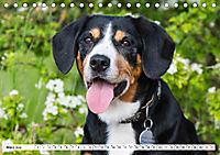 Mein bester Freund - Entlebucher Sennenhund (Tischkalender 2019 DIN A5 quer) - Produktdetailbild 3