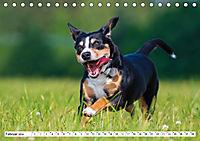 Mein bester Freund - Entlebucher Sennenhund (Tischkalender 2019 DIN A5 quer) - Produktdetailbild 2