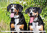 Mein bester Freund - Entlebucher Sennenhund (Tischkalender 2019 DIN A5 quer) - Produktdetailbild 1