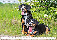 Mein bester Freund - Entlebucher Sennenhund (Tischkalender 2019 DIN A5 quer) - Produktdetailbild 9