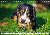Mein bester Freund - Entlebucher Sennenhund (Tischkalender 2019 DIN A5 quer) - Produktdetailbild 6