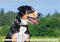 Mein bester Freund - Entlebucher Sennenhund (Tischkalender 2019 DIN A5 quer) - Produktdetailbild 5