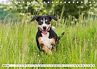 Mein bester Freund - Entlebucher Sennenhund (Tischkalender 2019 DIN A5 quer) - Produktdetailbild 4