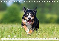 Mein bester Freund - Entlebucher Sennenhund (Tischkalender 2019 DIN A5 quer) - Produktdetailbild 12