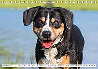 Mein bester Freund - Entlebucher Sennenhund (Tischkalender 2019 DIN A5 quer) - Produktdetailbild 10