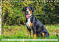 Mein bester Freund - Entlebucher Sennenhund (Tischkalender 2019 DIN A5 quer) - Produktdetailbild 11