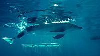 Mein Freund, der Delfin - Produktdetailbild 10
