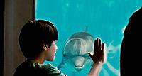 Mein Freund, der Delfin - Produktdetailbild 8