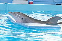 Mein Freund, der Delfin - Produktdetailbild 3
