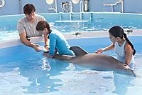 Mein Freund, der Delfin - Produktdetailbild 1