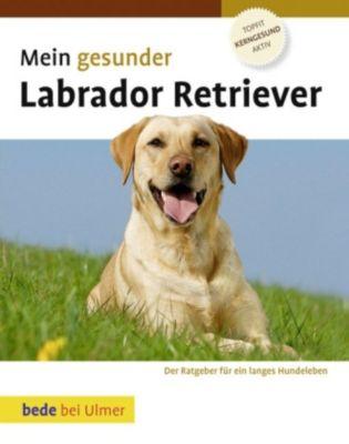 Mein gesunder Labrador Retriever, Lowell Ackerman