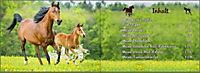 Mein Reiter-Tagebuch - Produktdetailbild 17
