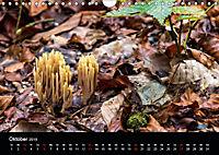Meine Heimat Westerwald (Wandkalender 2019 DIN A4 quer) - Produktdetailbild 10