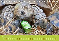 Meine Schildkröten (Tischkalender 2019 DIN A5 quer) - Produktdetailbild 11
