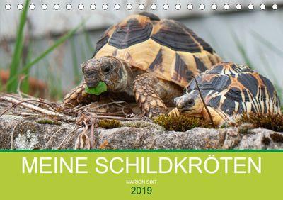 Meine Schildkröten (Tischkalender 2019 DIN A5 quer), Marion Sixt