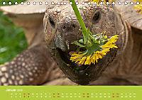 Meine Schildkröten (Tischkalender 2019 DIN A5 quer) - Produktdetailbild 1