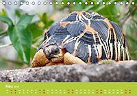 Meine Schildkröten (Tischkalender 2019 DIN A5 quer) - Produktdetailbild 3