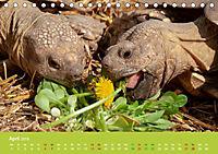 Meine Schildkröten (Tischkalender 2019 DIN A5 quer) - Produktdetailbild 4