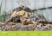 Meine Schildkröten (Tischkalender 2019 DIN A5 quer) - Produktdetailbild 8