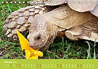 Meine Schildkröten (Tischkalender 2019 DIN A5 quer) - Produktdetailbild 10