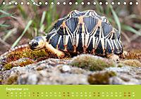 Meine Schildkröten (Tischkalender 2019 DIN A5 quer) - Produktdetailbild 9