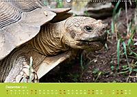 Meine Schildkröten (Wandkalender 2019 DIN A2 quer) - Produktdetailbild 12