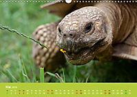 Meine Schildkröten (Wandkalender 2019 DIN A3 quer) - Produktdetailbild 5