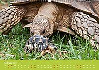 Meine Schildkröten (Wandkalender 2019 DIN A3 quer) - Produktdetailbild 2