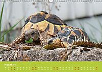 Meine Schildkröten (Wandkalender 2019 DIN A3 quer) - Produktdetailbild 8