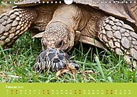 Meine Schildkröten (Wandkalender 2019 DIN A4 quer) - Produktdetailbild 2