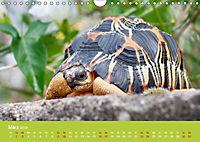 Meine Schildkröten (Wandkalender 2019 DIN A4 quer) - Produktdetailbild 3