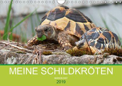 Meine Schildkröten (Wandkalender 2019 DIN A4 quer), Marion Sixt