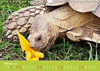 Meine Schildkröten (Wandkalender 2019 DIN A4 quer) - Produktdetailbild 10