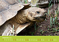 Meine Schildkröten (Wandkalender 2019 DIN A4 quer) - Produktdetailbild 12