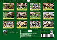 Meine Schildkröten (Wandkalender 2019 DIN A4 quer) - Produktdetailbild 13